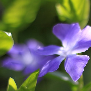 periwinkle | by jenny downing