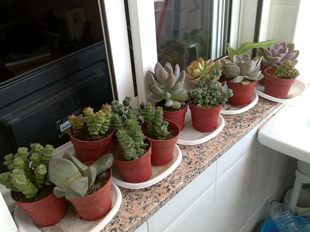 Cultivo y cuidados de 7 bellas plantas de interior for Plantas crasas interior