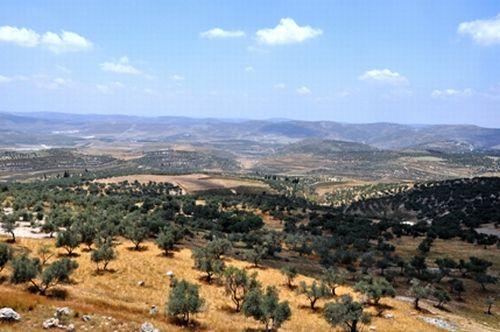 La Belleza De Palestina Cisjordania Paisajes De Invierno
