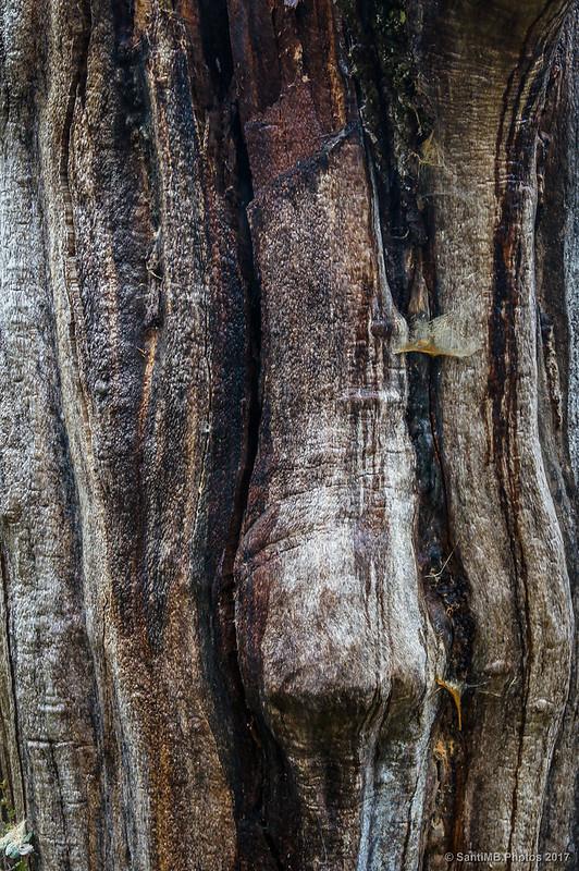 Detalle del tronco de un árbol muerto por un rayo