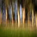 tree pan abtract