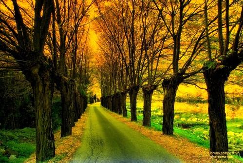 Viale Del Tramonto Sunset Boulevard Alberi Nudi D