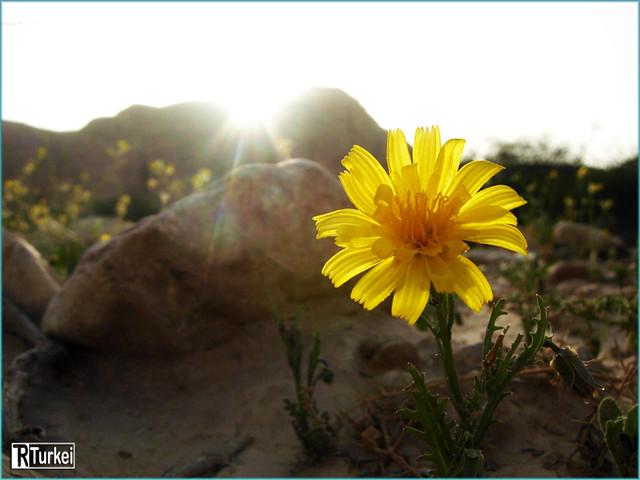 flwor  ماكرو  تركي التميمي  flickr, Beautiful flower