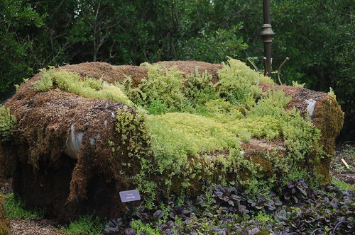 Moss Couch I Ve Got A Strong Temptation To Attempt One
