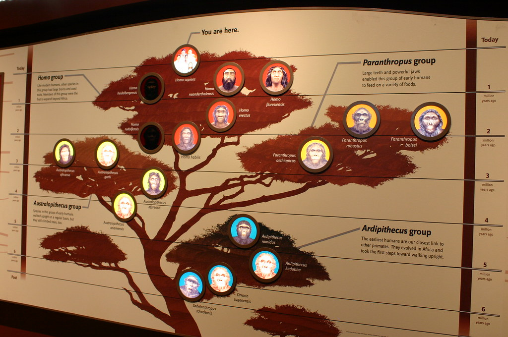Smithsonian Museum Of Natural History Human Evolution