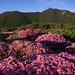 Mt. Taisen