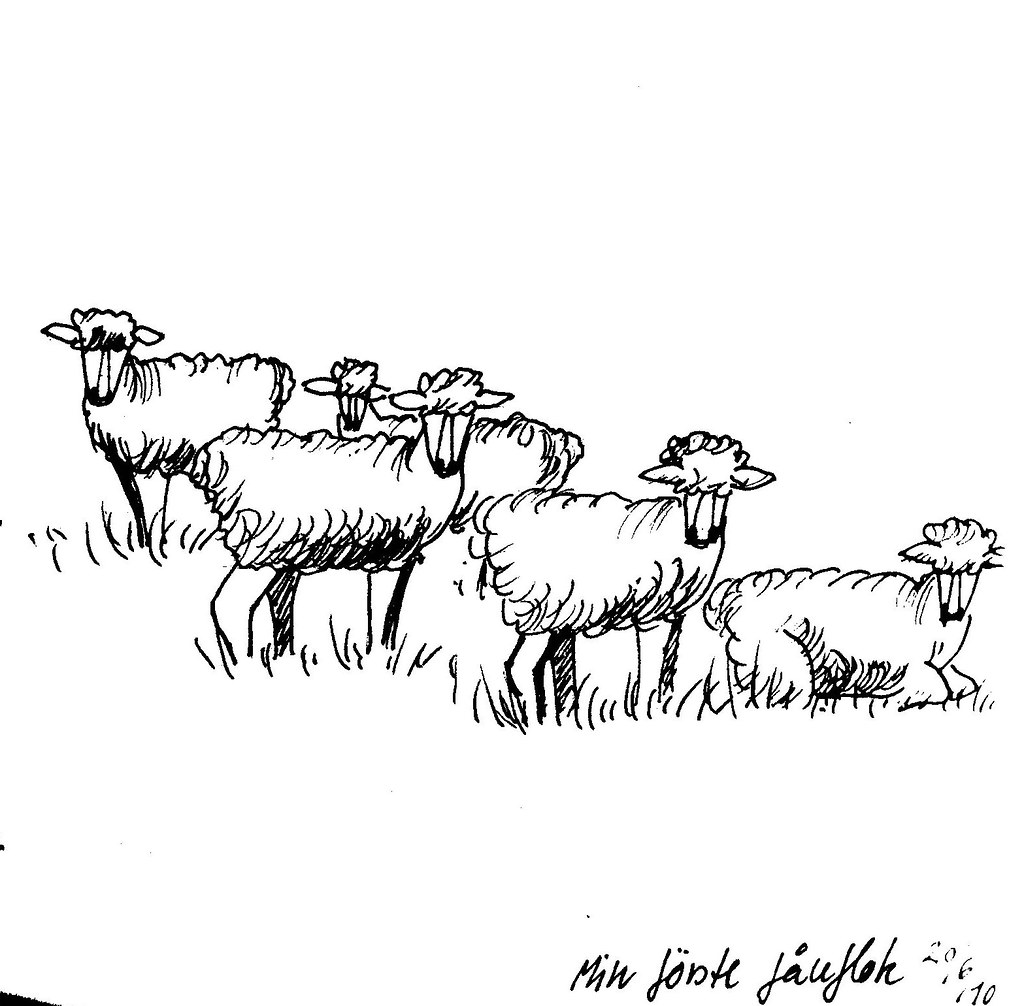 Sheep Flock Drawing my First Flock of Sheep Sketch