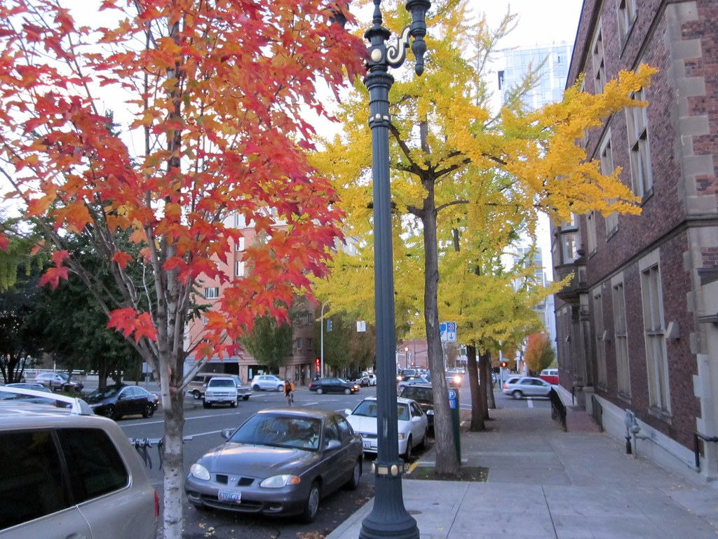 Portland color trees along the street in downtown - Camera world portland ...