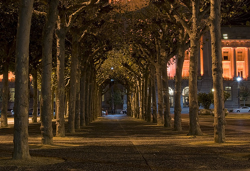 Tunnel of Trees | by Chip Shotz