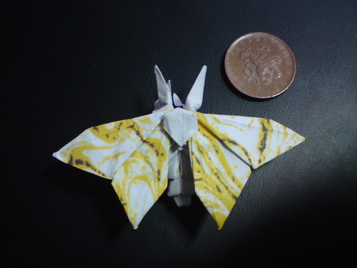 moth | by origamiPete