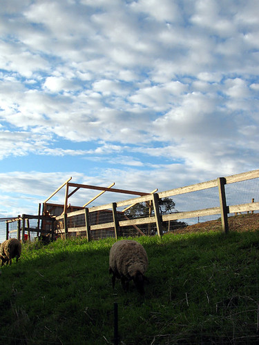 sheep_clouds | by Green Kitchen