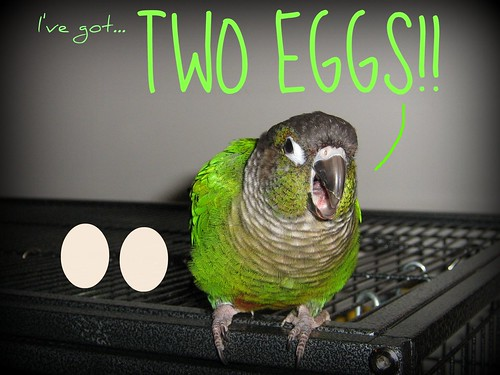 Update: TWO Eggs! | by pandoraice