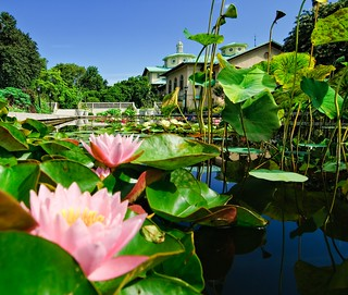 Lily Pool Terrace | by Brooklyn Botanic Garden