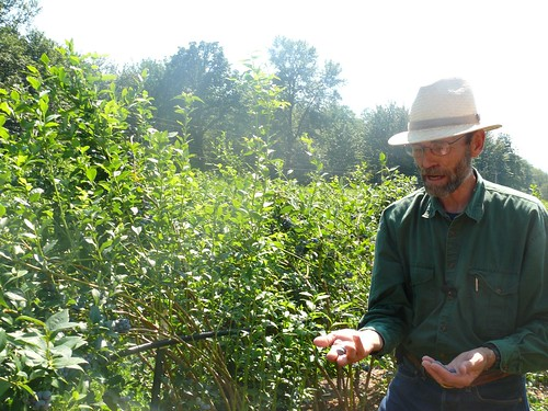 Jim Meyer and blueberry bushes | by Cascadian Farm
