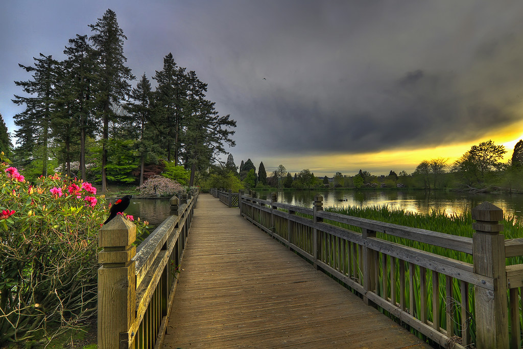 ... Bridge In Crystal Springs Rhododendron Garden At Sunset   HDR | By  David Gn Photography