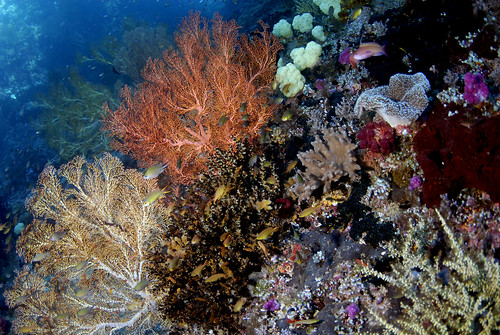 015_adj_DSC6101 beautiful shallow reef in Raja Ampat | by edpdiver