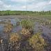 Swamp Bog, Marion County, Georgia 2