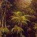 Tropical Forest, Habitat Card, Martin Johnson Heade, http://commons.wikimedia.org/wiki/Category:Martin_Johnson_Heade