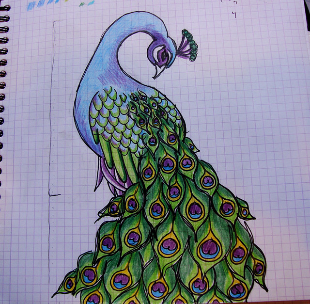 Peacock Concept Flickr Photo Sharing