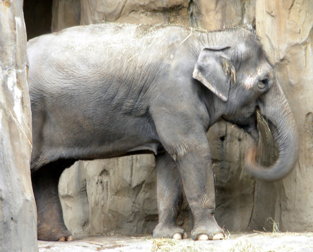 Smiling Elephant | Oregon Zoo. What is it about elephants ...