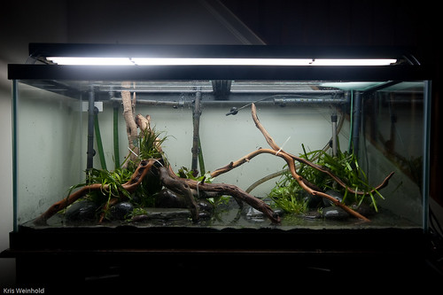 Rico's Tank | by guitar fish
