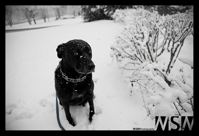 winter 2010 yeah you think this is funny don t you sa flickr