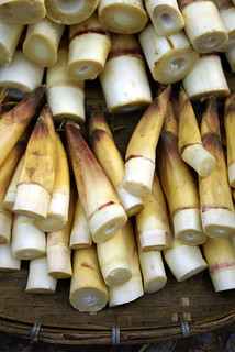 Bamboo Shoots - Northern Laos | by The Hungry Cyclist