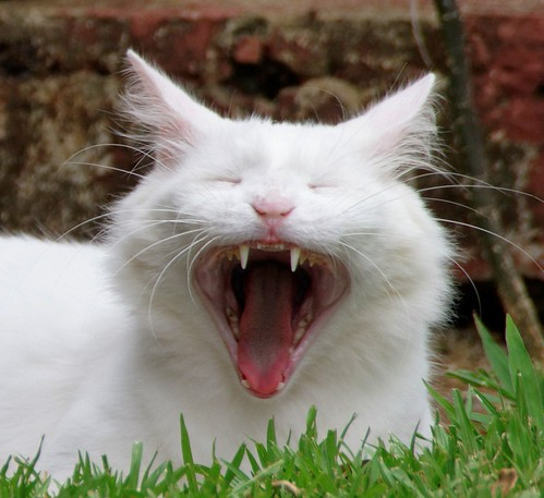 The Laughing Cat | by sly's eye