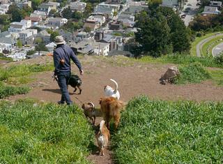 Best Dog Walkers Sf