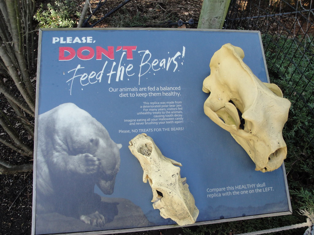 toledo zoo polar bear skulls by fkalltheway