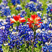 Paintbrush with bluebonnet on it