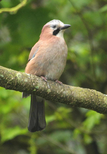 Jay | by alison brown 35