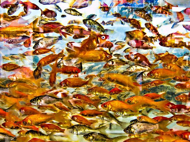 Day 92 petco fish tank 092 365 took the kids to petco for Petco fish aquariums