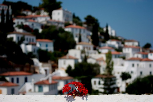 Flowers of Hydra Island | by chrisplex