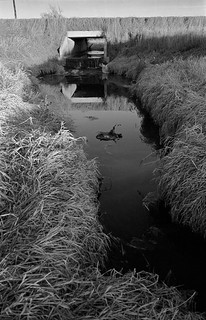 The Culvert Pond, Craig, NE, January, 1987
