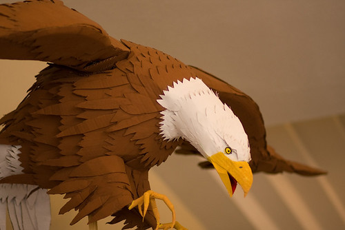 research papers about bald eagles