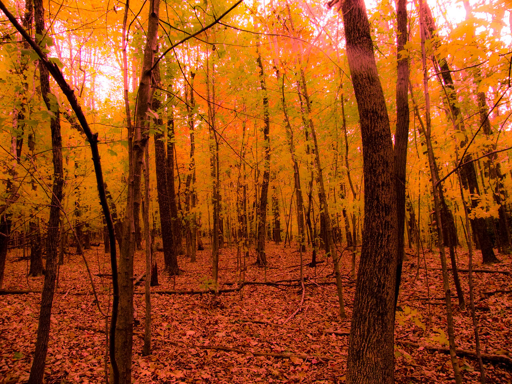 Orange Forest | It was a very colorful season with the