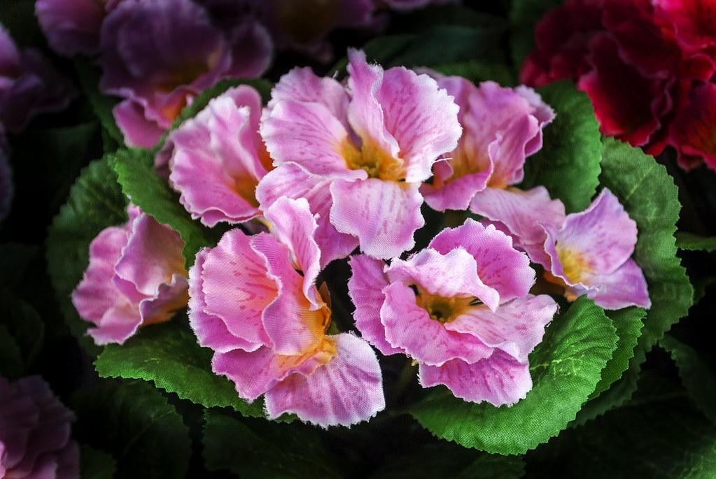 Flores Sencillas Pascual Flickr