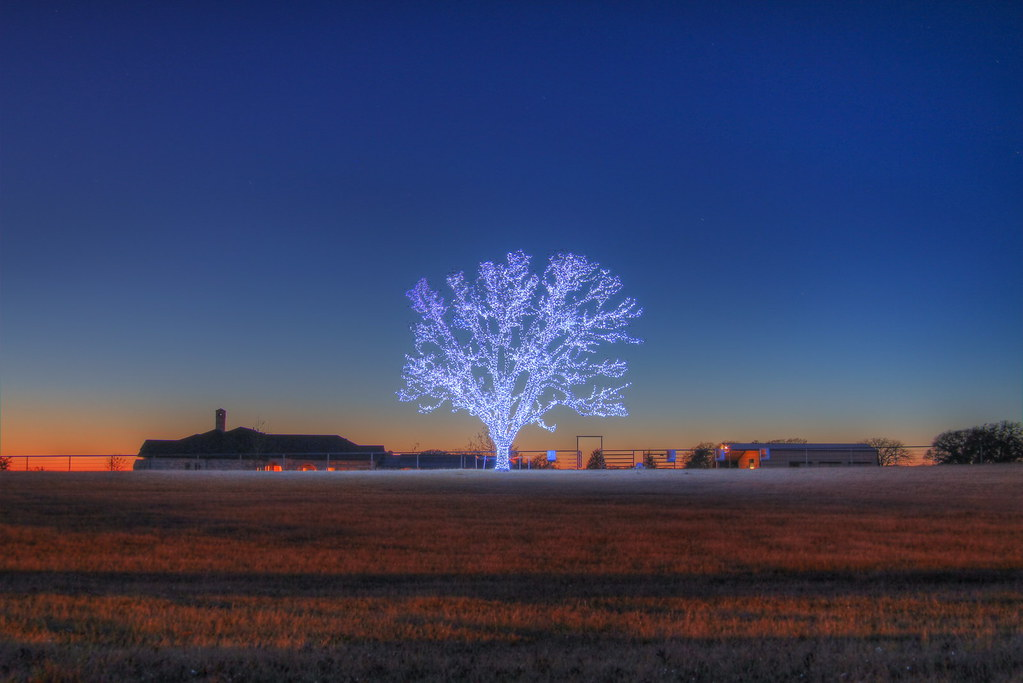 A Lone Tree Decorated For Christmas. …