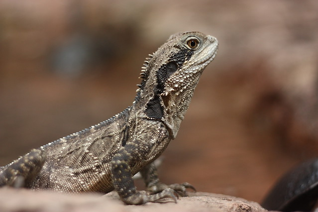 mini dragon by nzfisher
