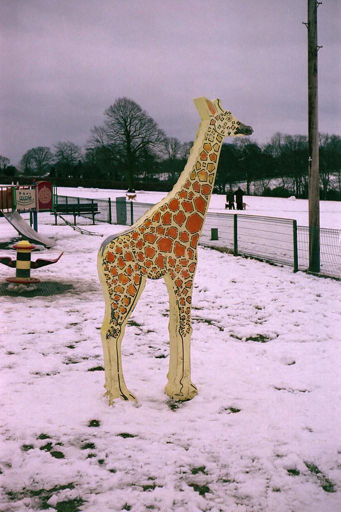 winter giraffe taken with argus c3 in week 8 of my 52 cam flickr. Black Bedroom Furniture Sets. Home Design Ideas