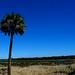 Myakka River State Park Palm Tree fen