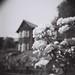 kyūfurukawagardens   旧古河庭園