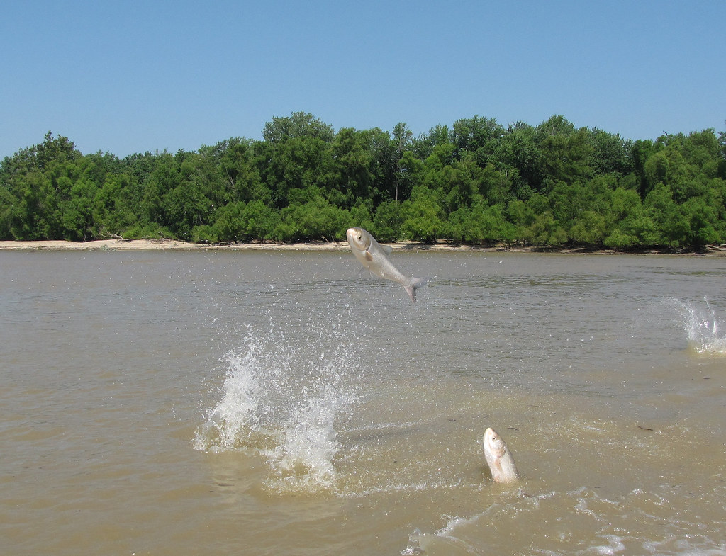 asian singles in jump river Speeddatecom.