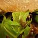 Woodland Mushroom Torta