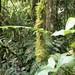panama-tropical-jungle-jungla-tropical-rainforest