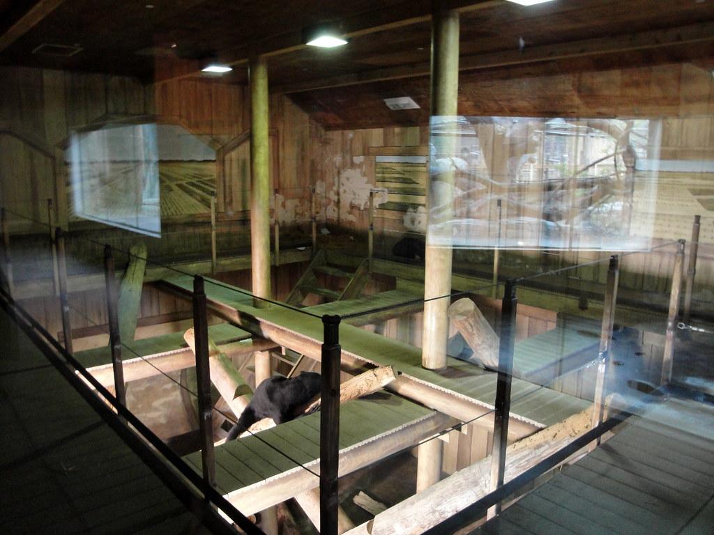 Columbus Zoo Sun Bear Indoor Exhibit The Indoor