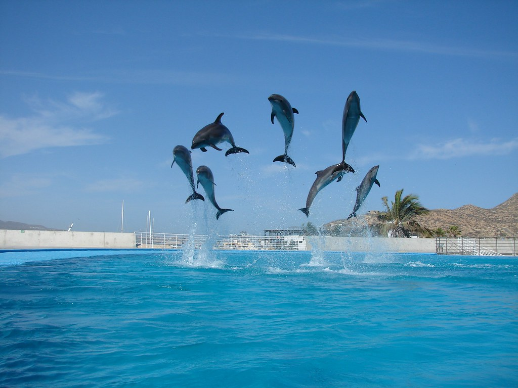 seven jumping dolphins | Suzba | Flickr