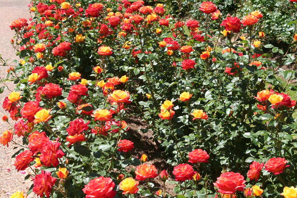 A Rose Garden Bed And Breakfast Nashville Tn