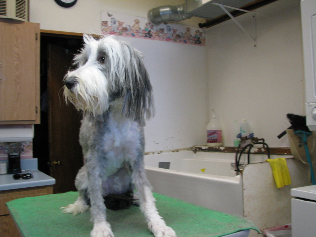 Dog Grooming New Orleans